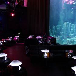 L'aQuarium Club